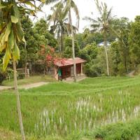 Ferienhaus in Reisfeldern