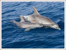Bewundern Sie die Delphine