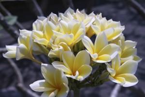 Schönen Blumen