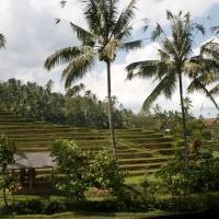 Reisfelder sehen wie Treppen
