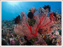 Korallenüberzogenen Riffen