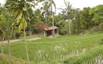 Besuchen Sie einer balinesischen Dorfes